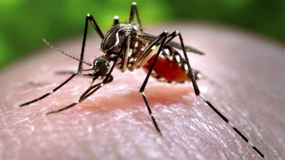 87953607_c0093043-feeding_mosquito-spl