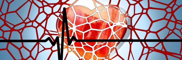 heart-disease-heart-mesh